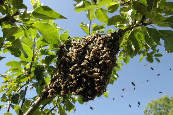 img/hero-chrisrudge_flickr_swarm.jpg
