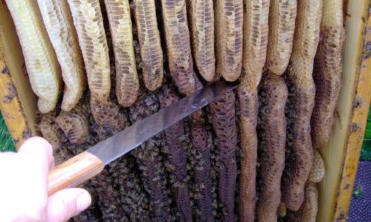 Messer zum Freischneiden der Waben
