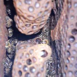 Verstecktes Weiselnäpfchen an einer tiefer liegenden Stelle.