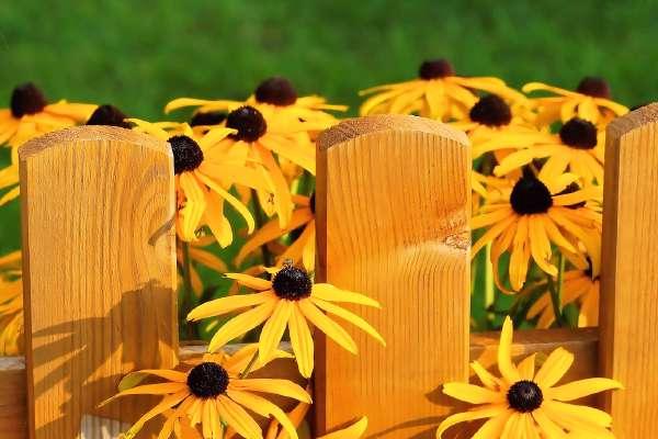 img/hero-pixabay_flowers.jpg